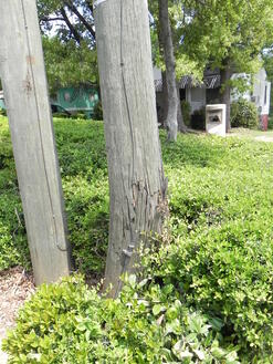 nescviolations double wood abandoned poles 003